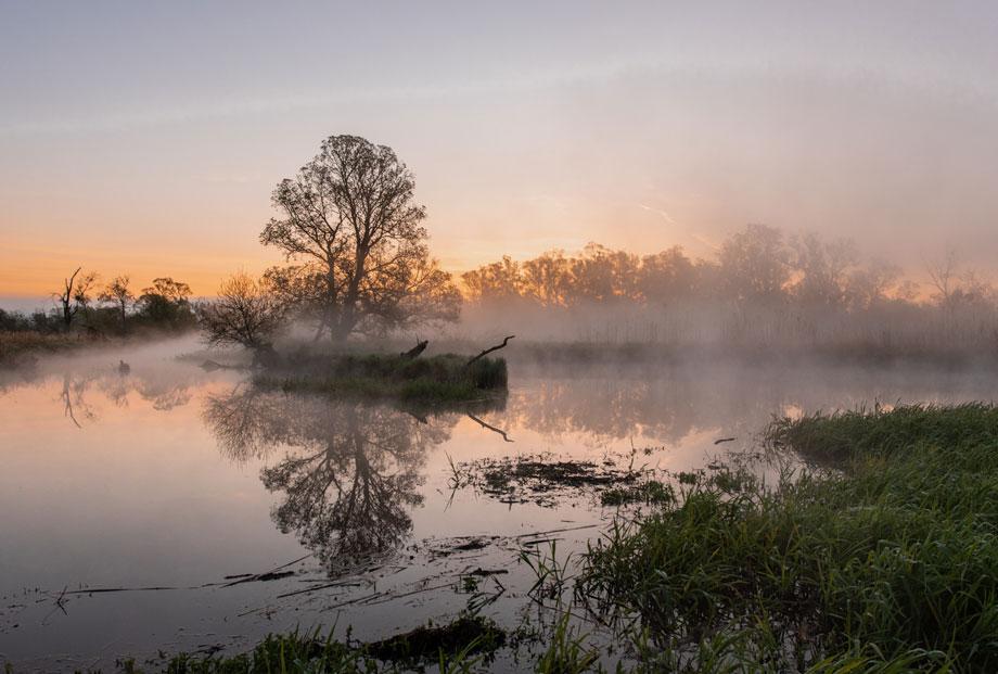 Morgenstimmung im Nationalpark Unteres Odertal