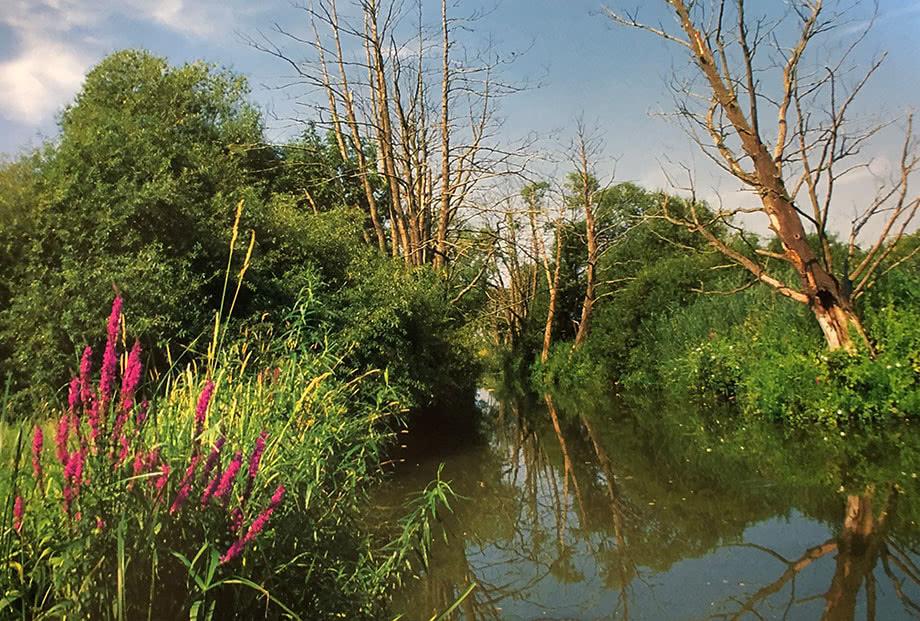 Typische Landschaft im Nationalpark Unteres Odertal