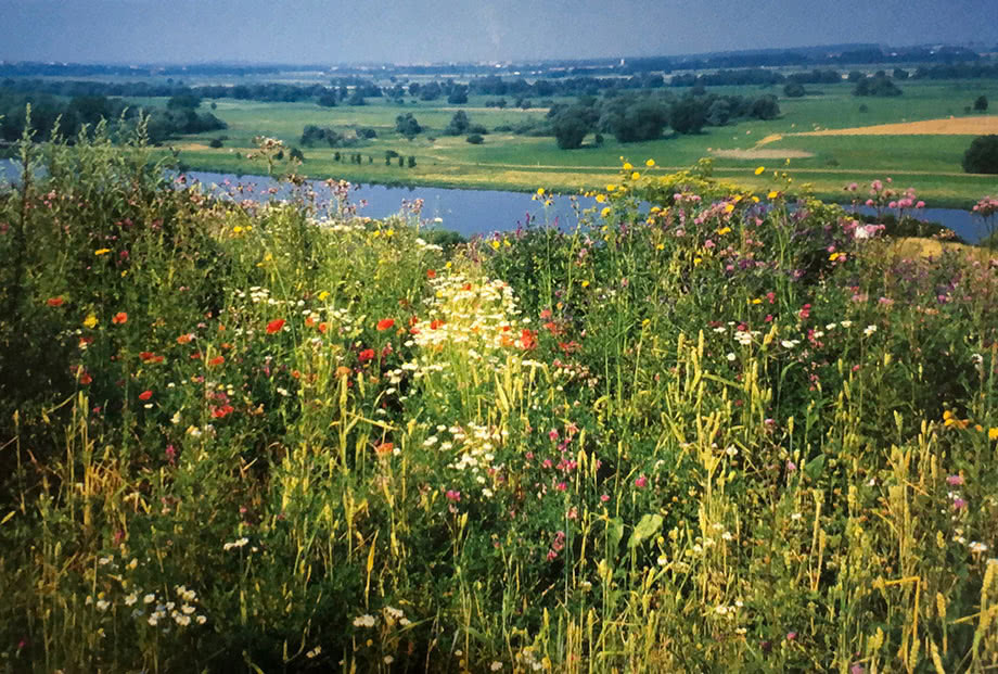Trockenrasenfläche mit vielfältiger Flora